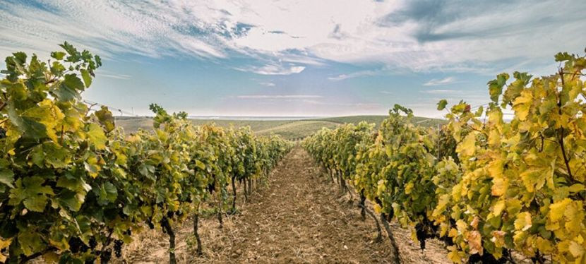 EU supports winemaking in Zakarpattia