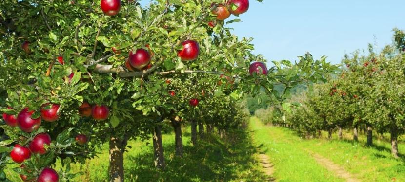 EU funds horticultural cluster in Vinnytsiaregion